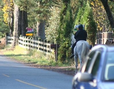 Horse Woman Braves 132 Av.