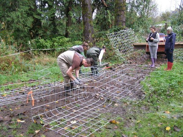 Beaver Fence2