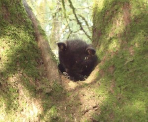 Baby Bear waiting for Mom